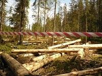 <!--:cs-->Vědci: Nové zásahy u Ptačího potoka na Šumavě mohou oddálit návrat přirozeného horského lesa o několik století<!--:-->