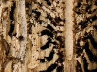 Křest knihy Lesy Šumavy, lýkožrout a ochrana přírody