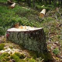 <!--:cs-->Správa Národního parku Šumava zpracovala plán péče, který nesplňuje základní kritéria<!--:-->