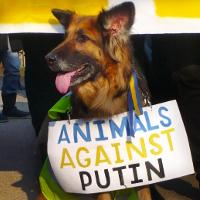 <!--:cs-->Putine, ruce pryč od Ukrajiny!<!--:-->