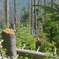 <!--:cs-->Návrh novely zákona o ochraně přírody nechrání dostatečně lesy vnárodních parcích<!--:-->
