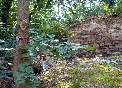 Zbytky policejní pásky na jednom z kmenů stromu.