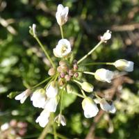 Plané rostliny pražské Stromovky - březen