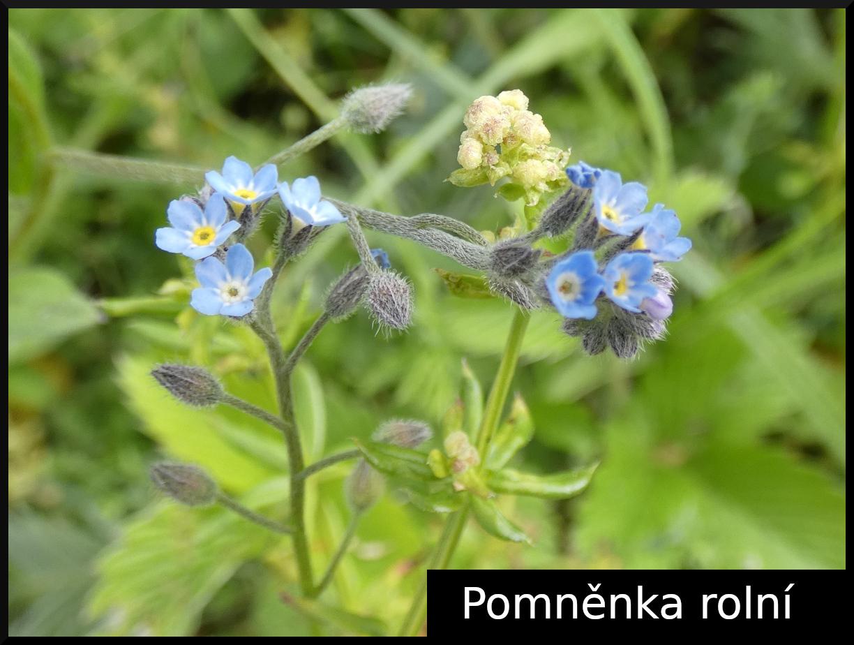 2020_06_pomnenka_rolni_01