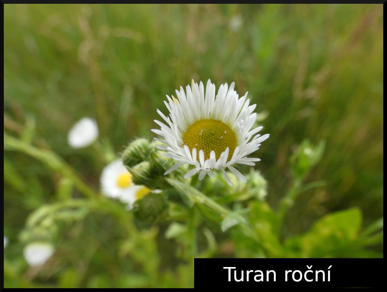 2020_06_turan_rocni_01