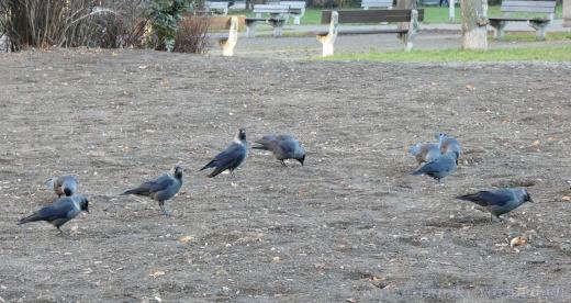 Nakonec území obsadily vrány.